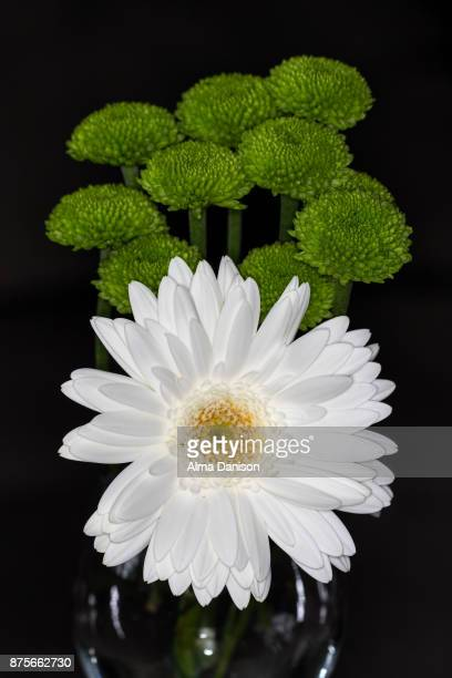 close-up of white and green flowers - alma danison imagens e fotografias de stock