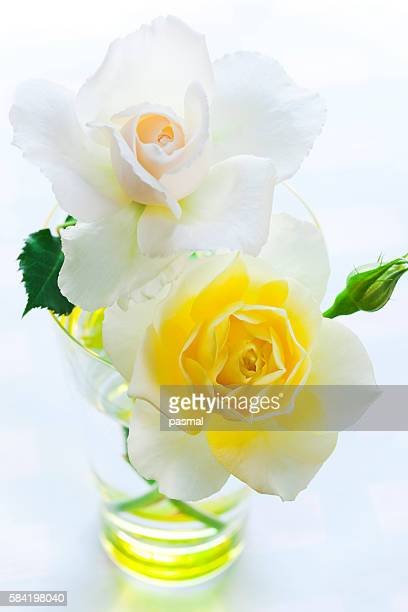 Close-up of white and yellow roses