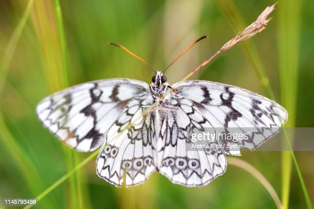 close-up of white butterfly on plant - andrea rizzi stockfoto's en -beelden