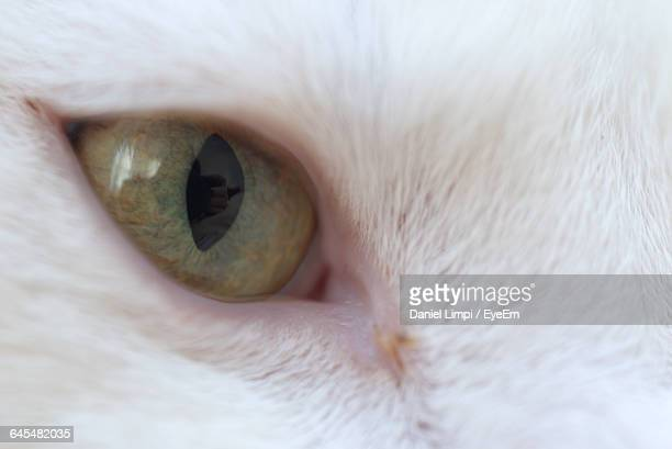 Close-Up Of White Cat