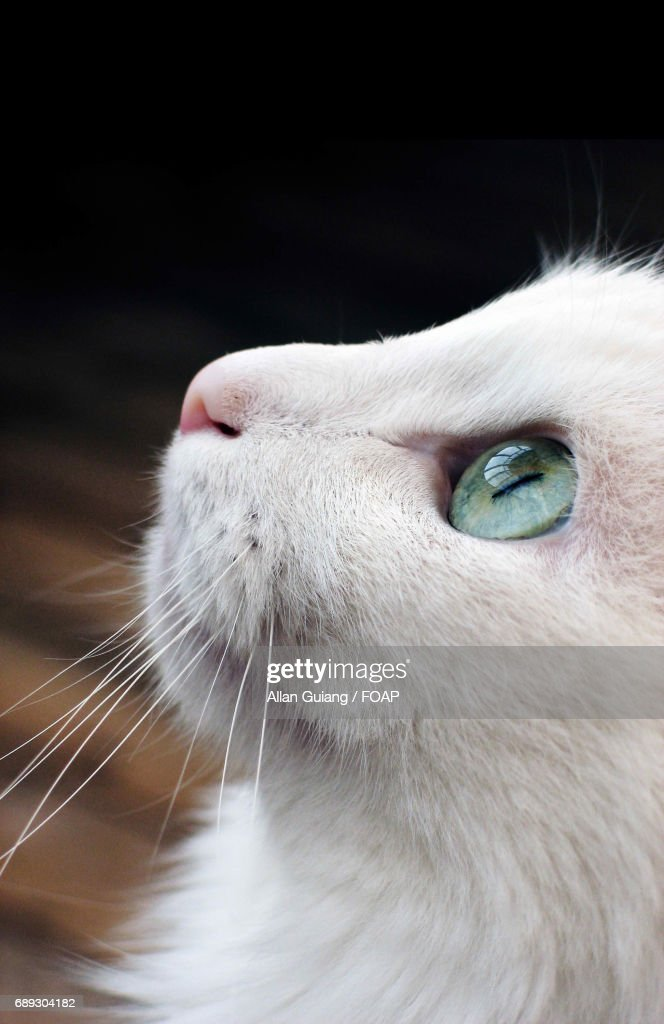 Close-up of white cat : Stock Photo