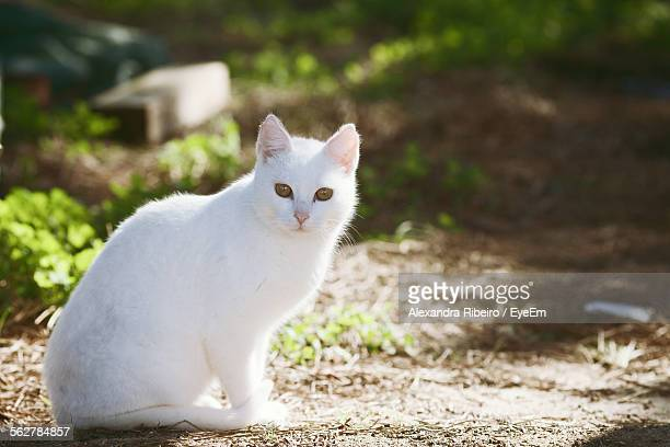 Close-Up Of White Cat Sitting