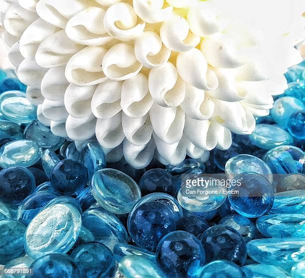 Close-Up Of White Dahlia Flower On Glass Pebbles