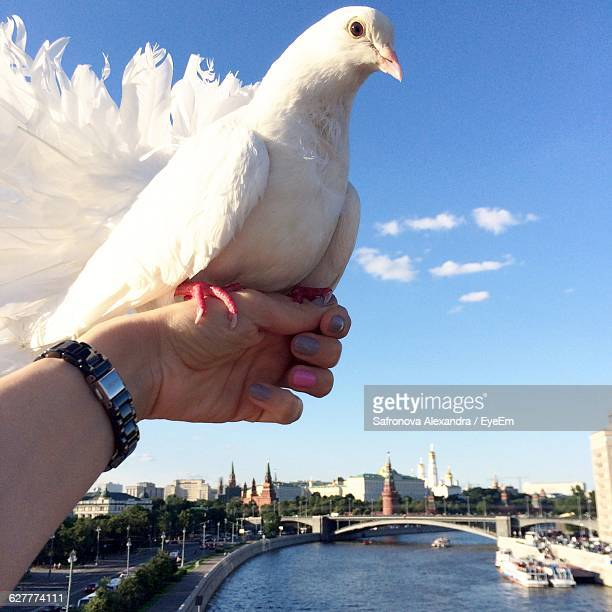 Close-Up Of White Dove Perching On Woman Hand Against Sky