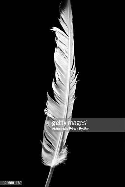 close-up of white feather against black background - piuma foto e immagini stock