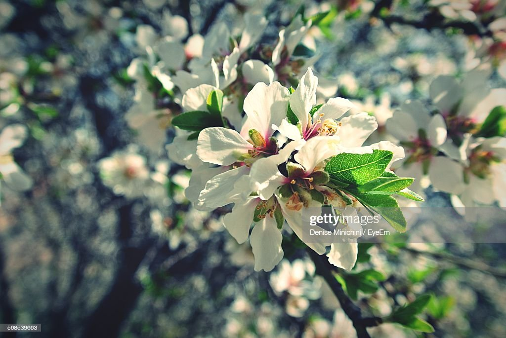 Close-Up Of White Flower Blooming On Tree : Stock Photo