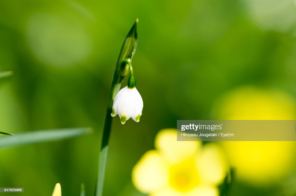 Closeup of white flower blooming outdoors stock photo getty images close up of white flower blooming outdoors stock photo mightylinksfo Gallery