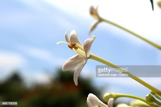 Close-Up Of White Flower Growing On Plant Against Sky