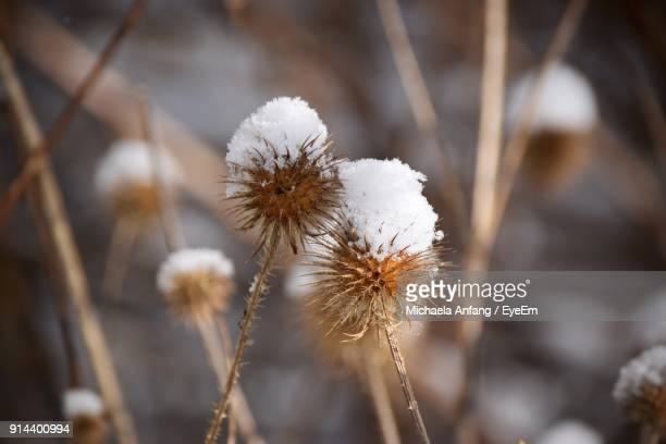 close-up of white flower in winter - anfang stock pictures, royalty-free photos & images