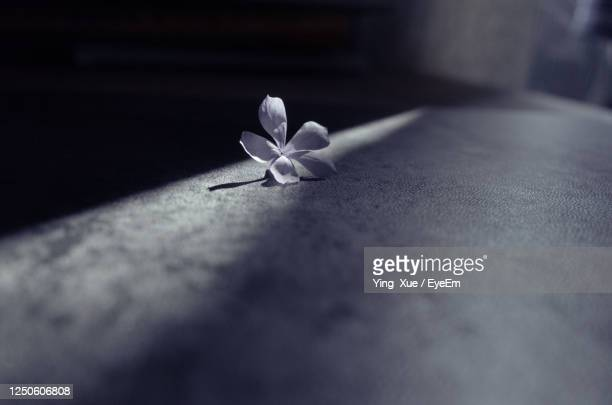 close-up of white flower on table - changzhou stock pictures, royalty-free photos & images