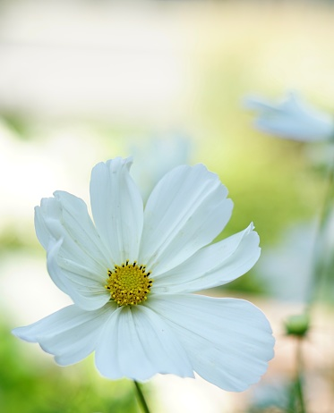 Close-Up Of White Flower - gettyimageskorea