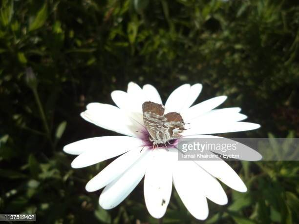 close-up of white flower - ismail khairdine stock photos and pictures