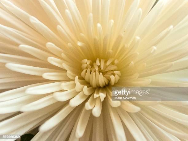 Closeup of white flower