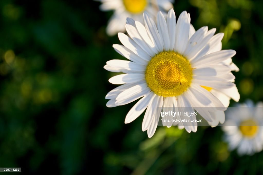 Close-Up Of White Flower : Stock Photo