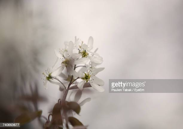 close-up of white flower tree - paulien tabak stock pictures, royalty-free photos & images