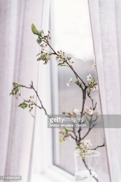 Close-Up Of White Flowering Plant By Window