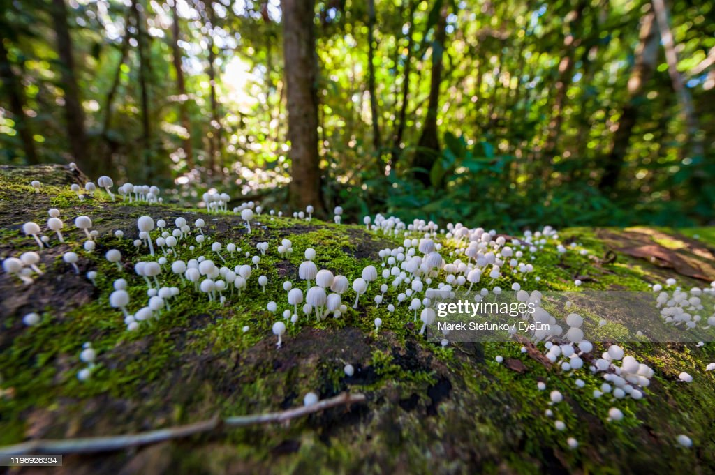 Close-Up Of White Flowering Plant In Forest : Stock Photo