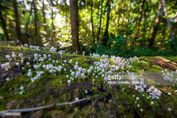 close-up of white flowering plant in forest - marek stefunko stock pictures, royalty-free photos & images