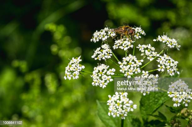 close-up of white flowering plant - eyeem stock pictures, royalty-free photos & images