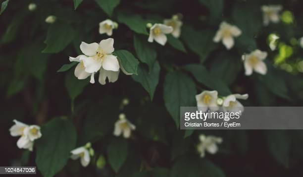 close-up of white flowering plant - bortes stock-fotos und bilder