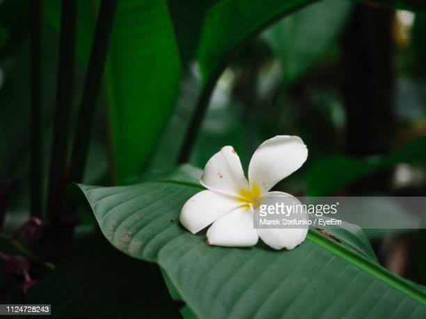 close-up of white flowering plant - marek stefunko stock photos and pictures