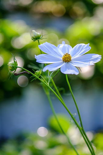 Close-Up Of White Flowering Plant - gettyimageskorea