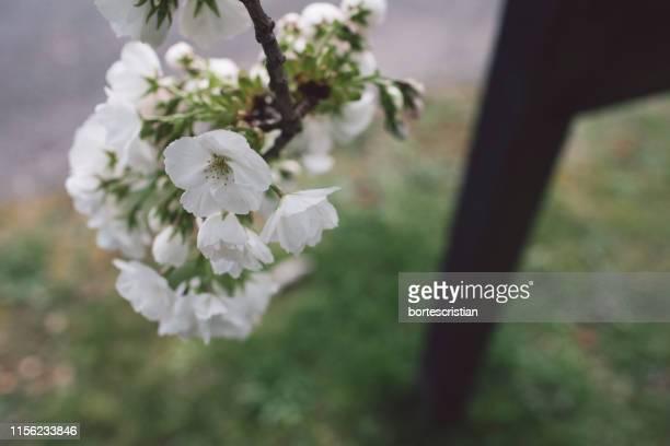 close-up of white flowering plant - bortes fotografías e imágenes de stock