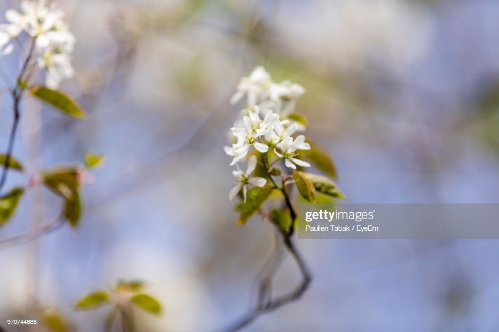 Close-Up Of White Flowering Plant : Stockfoto