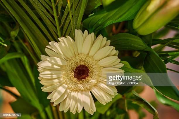 close-up of white flowering plant,northampton,united kingdom,uk - northampton stock pictures, royalty-free photos & images