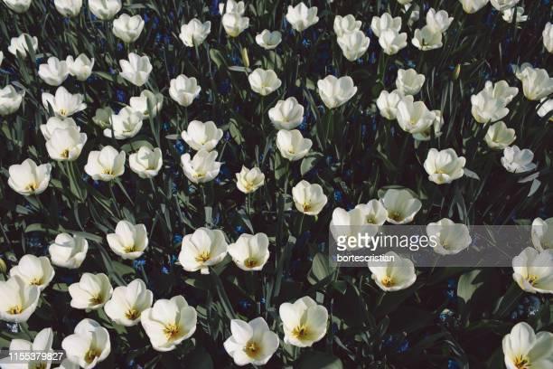 close-up of white flowering plants - bortes foto e immagini stock