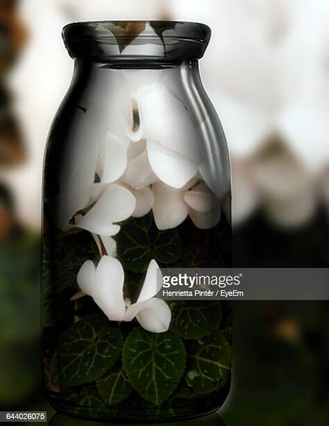 close-up of white flowers and green leaves in glass bottle - bottle green stock pictures, royalty-free photos & images