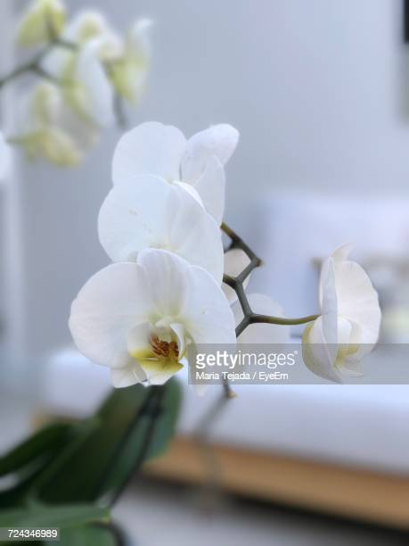 close-up of white flowers blooming on tree - maria tejada stock pictures, royalty-free photos & images