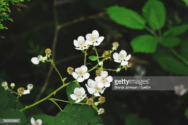 close-up of white flowers blooming on tree - brandi johnson stock pictures, royalty-free photos & images