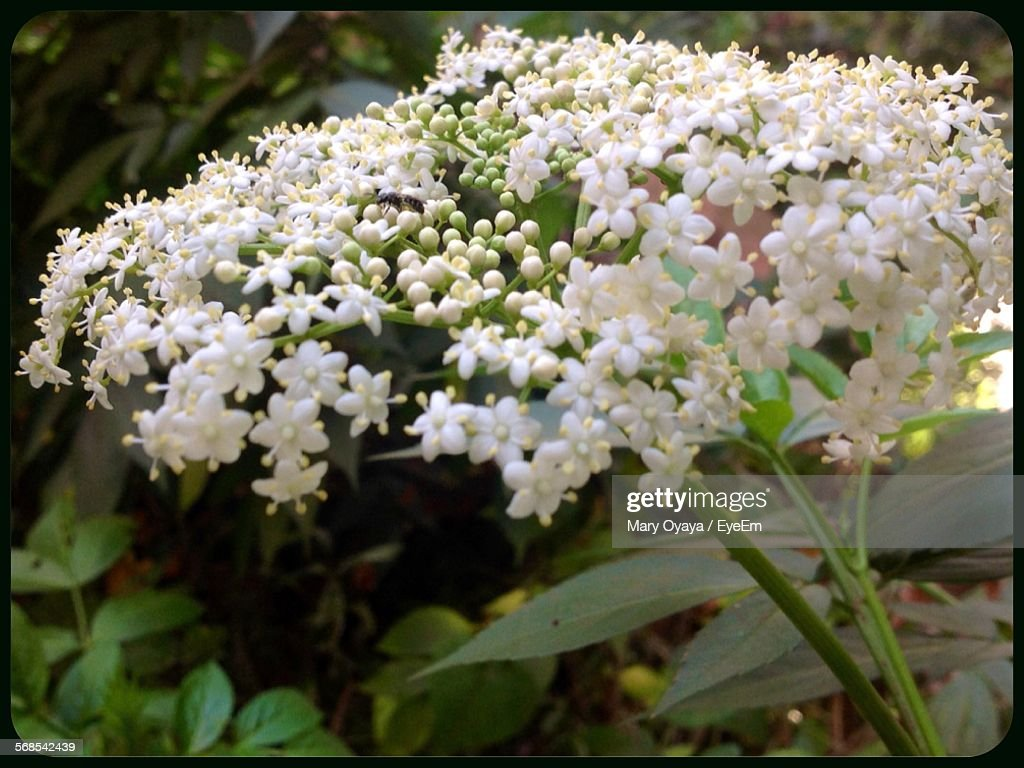 Close-Up Of White Flowers Blooming Outdoors : Stock Photo
