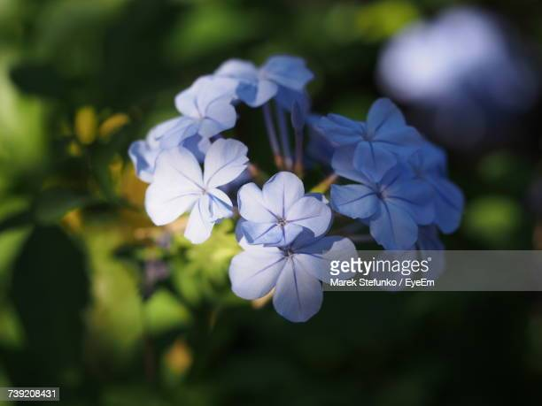 close-up of white flowers blooming outdoors - marek stefunko stockfoto's en -beelden