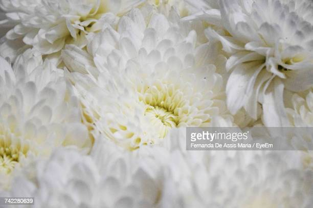 close-up of white flowers blooming outdoors - assis ストックフォトと画像