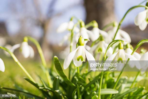 close-up of white flowers blooming outdoors - angela rohde stock-fotos und bilder