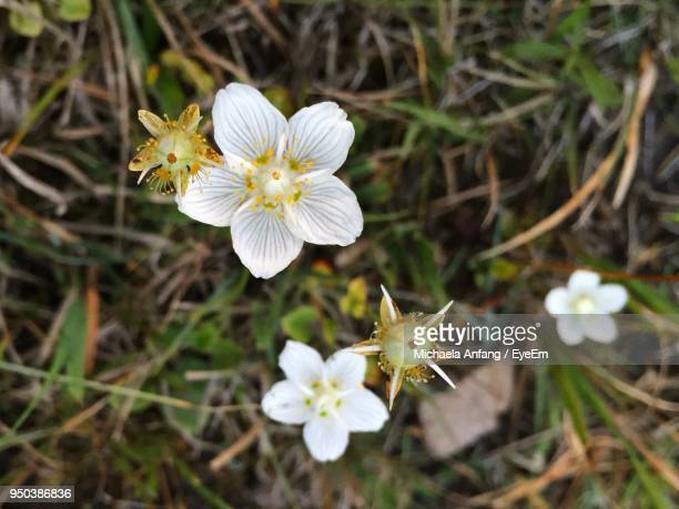 close-up of white flowers blooming outdoors - anfang stock pictures, royalty-free photos & images
