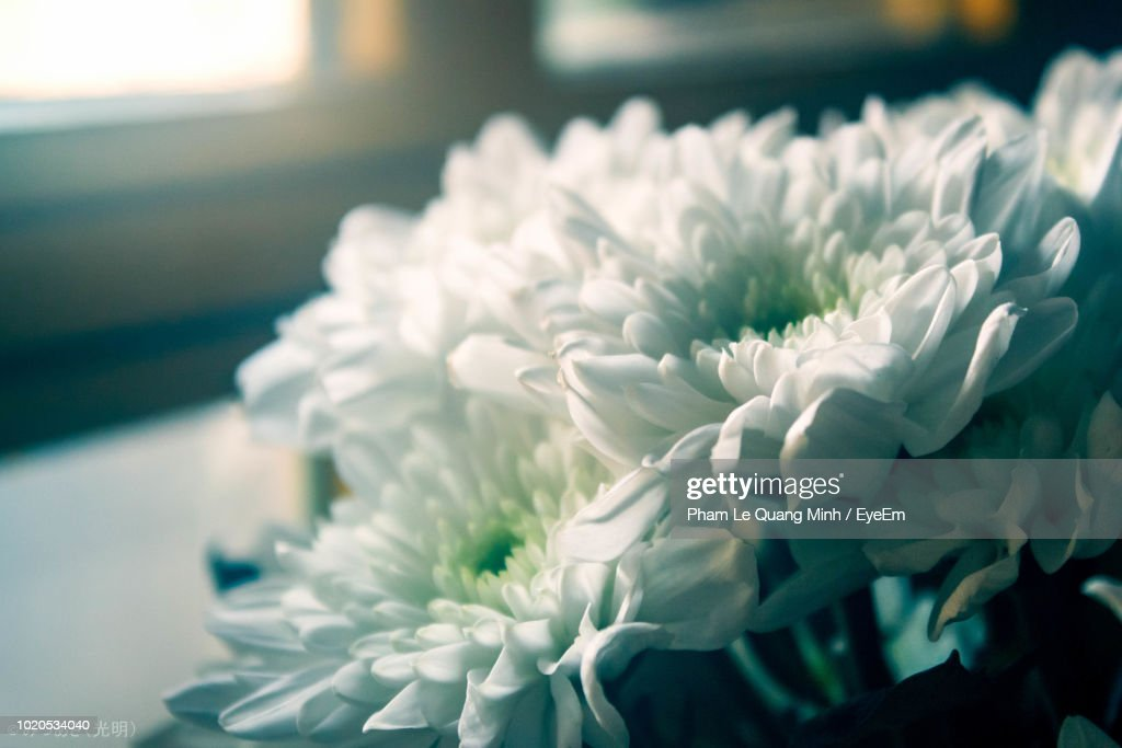 Closeup of white flowers stock photo getty images close up of white flowers stock photo mightylinksfo