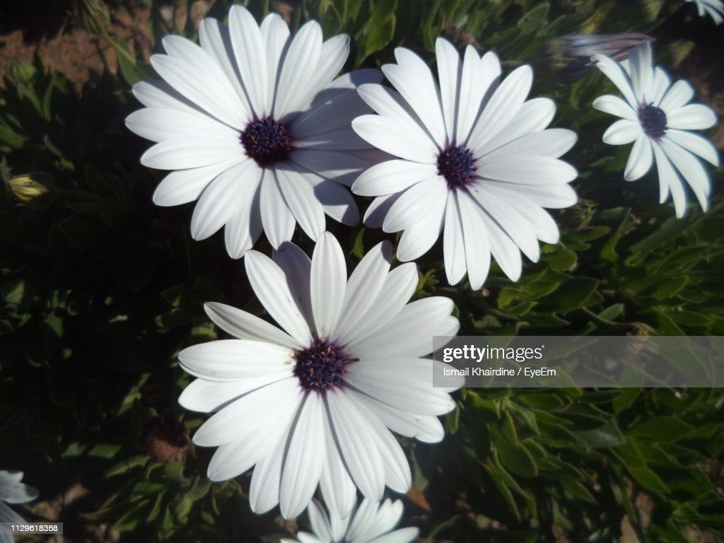 Close-Up Of White Flowers : Stock Photo