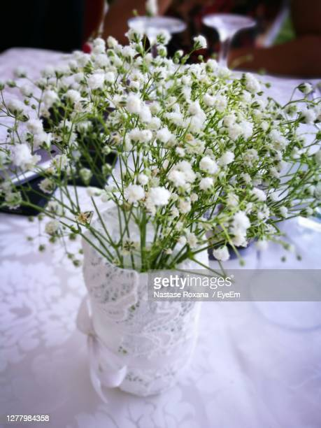 close-up of white flowers - eyeem collection stock pictures, royalty-free photos & images