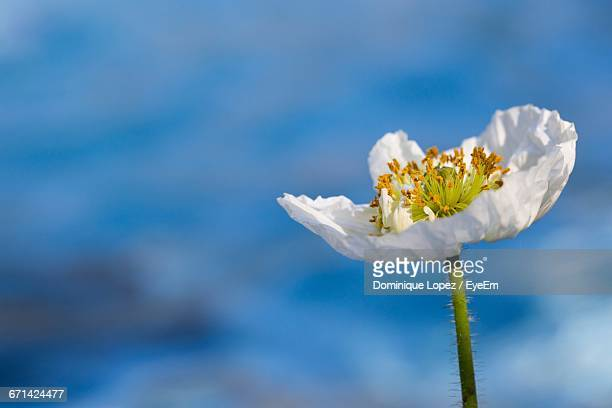 close-up of white flowers - lopez stock pictures, royalty-free photos & images