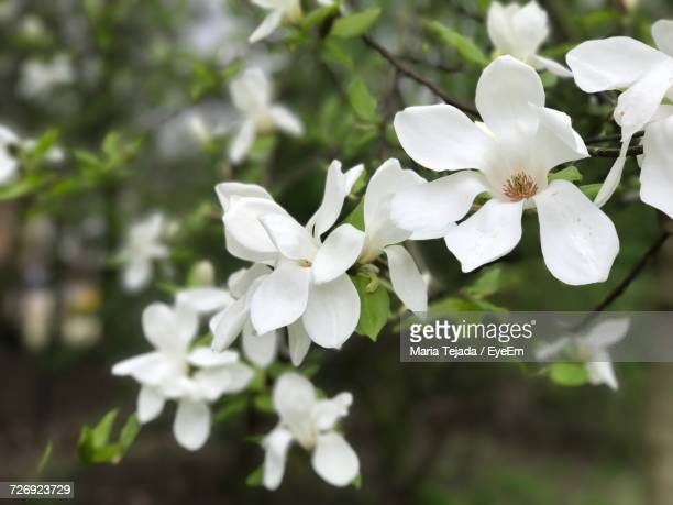 close-up of white flowers - maria tejada stock pictures, royalty-free photos & images