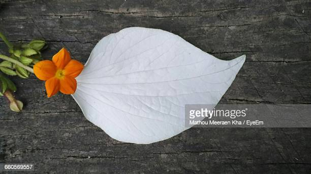 Close-Up Of White Leaf And Orange Flower On Table