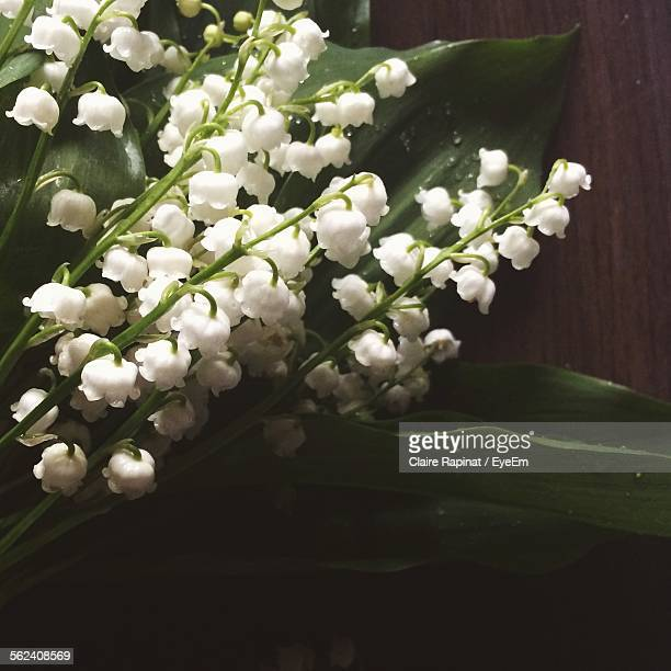 Close-Up Of White Lily Of Valley Flowers