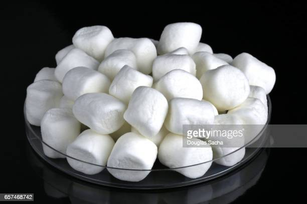 Close-up of white Marshmallows (Althaea officinalis)