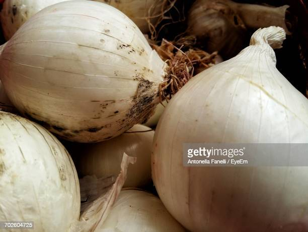 close-up of white onions - antonella stock photos and pictures