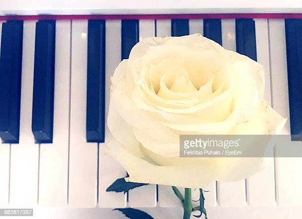Close-Up Of White Rose On Piano