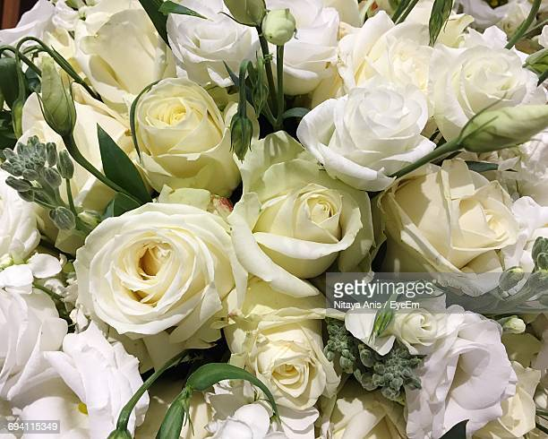 Close-Up Of White Roses