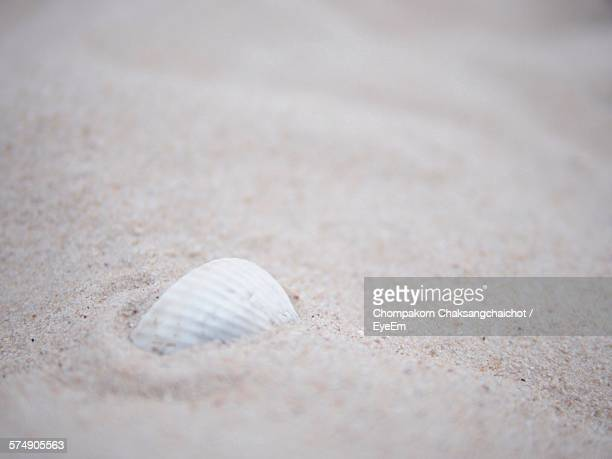 Close-Up Of White Seashell In Sand On Beach